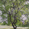 'Green Tree' 2019 oil painting by Emma J Williams