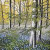 Bluebell Solitude, linocut by Alexandra Buckle