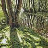 Trow Pool Sun, linocut by Alexandra Buckle