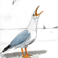 Sea Gull - Illustration for Jean Kenward's poem.. Inktense and Pencil .. A4