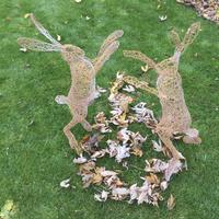 Boxing Hares - Wire Sculpture on display at Westbury Arts Centre Milton Keynes