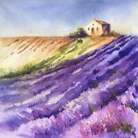 lavender field  Contemporary Watercolour painting