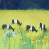 Meadow Bright Buttercups, Cows Grazing. Acrylic on canvas. 20 x 20 ins ( 51 x 51 cm)