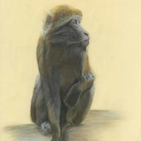 """""""On the lookout"""" Pastel Framed 21.5x18 inches"""