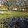Alexandra Buckle Lakeside Puddles