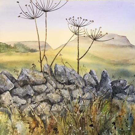 Dry stone Wall Peak District Hogweed